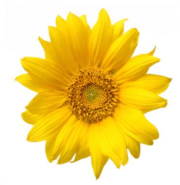 Flower Arrow Head Filler